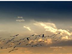 ...Love, Seagulls...