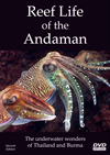 Reef Life Of The Andaman