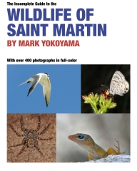 The Incomplete Guide to the Wildlife of Saint Martin