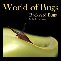 World of Bugs