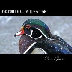 Reelfoot Lake ~ Wildlife Portraits