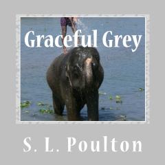 Graceful Grey