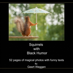 Squirrels  with  Black Humor