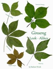 Ginseng Look-Alikes