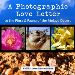 A Photographic Love Letter to the Flora and Fauna of the Mojave Desert