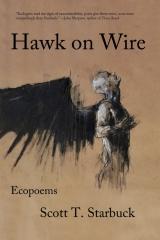 Hawk on Wire